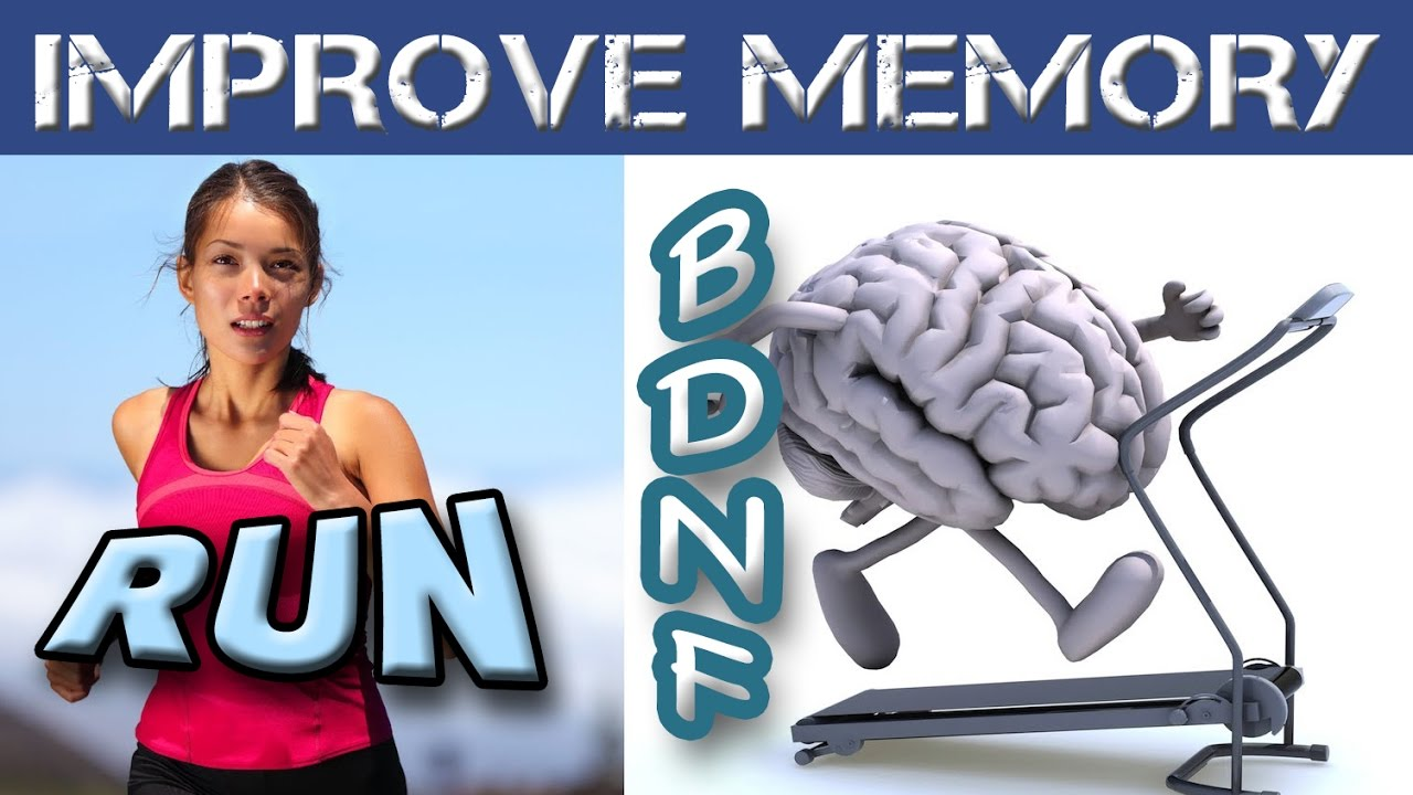 ? How Running and Exercise Improves Memory – BDNF Neurogenesis Brain Grow Neurons   Training