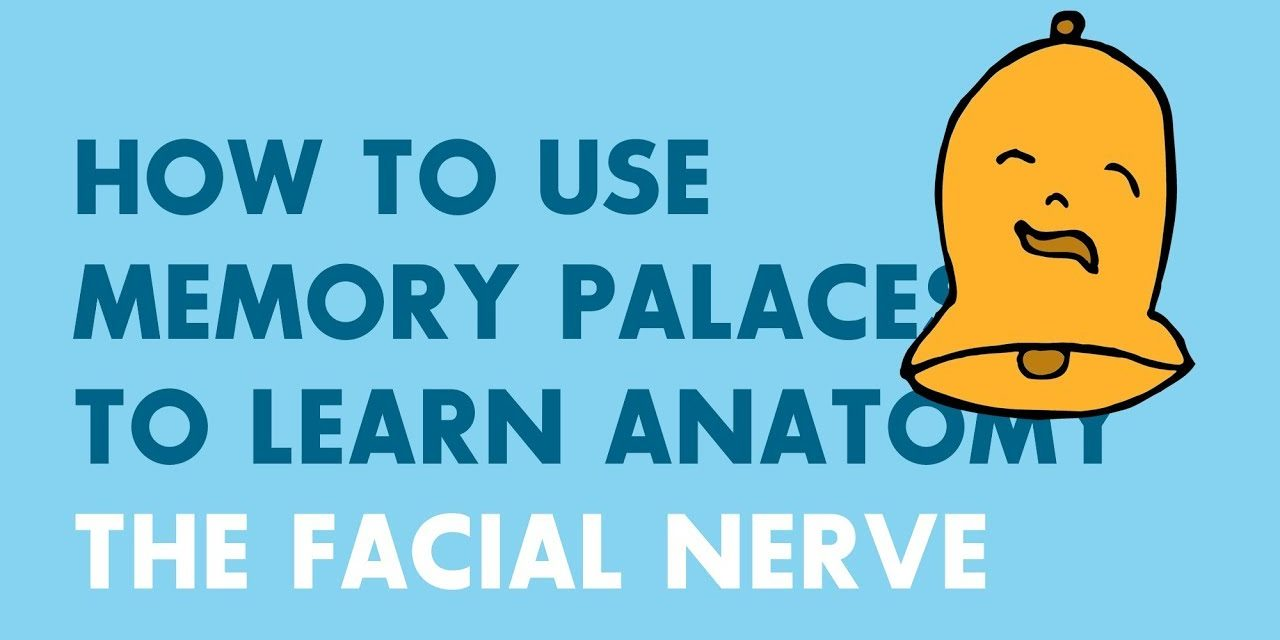 How to Use Memory Palaces in Medical School | Anatomy: Facial Nerve