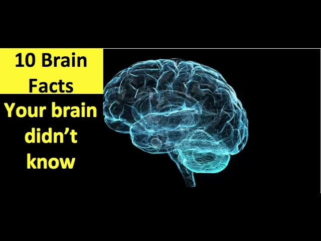 Brain Facts Your Brain Doesn't Know