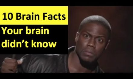 Brain Facts Your Brain Doesn't Know Part 2