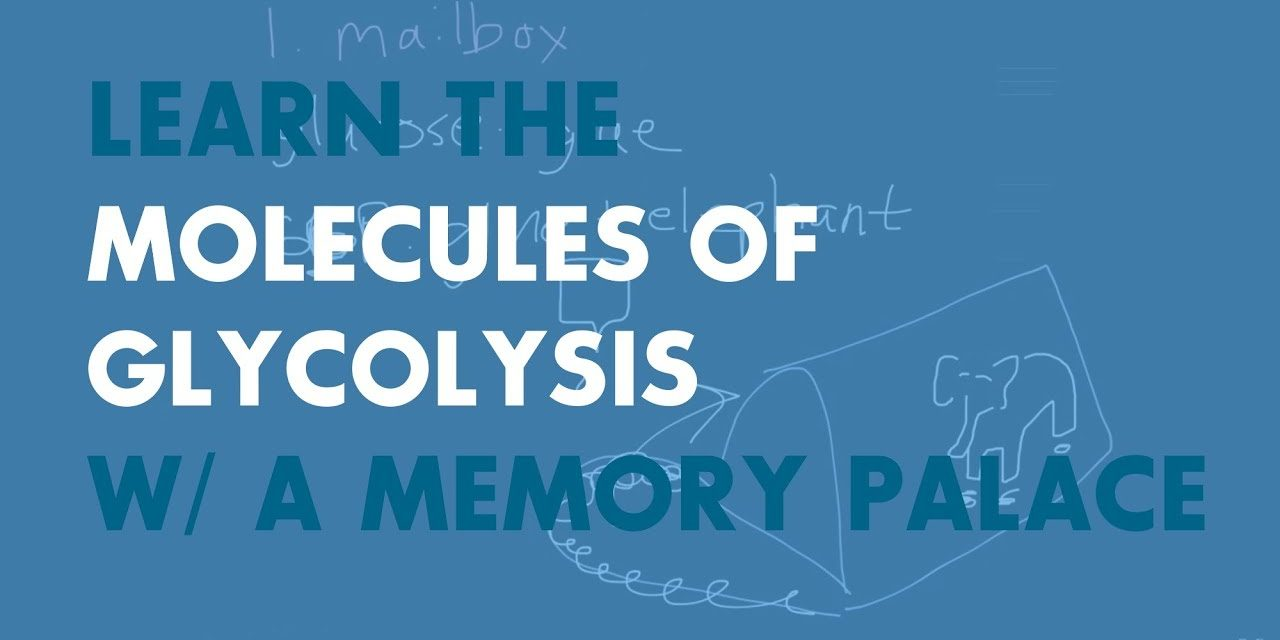 Learning Glycolysis with a Memory Palace