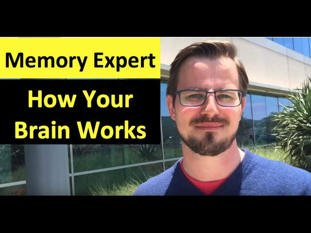 Memory Expert | How Your Brain Works